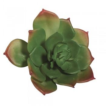 Sukulent Echeveria green
