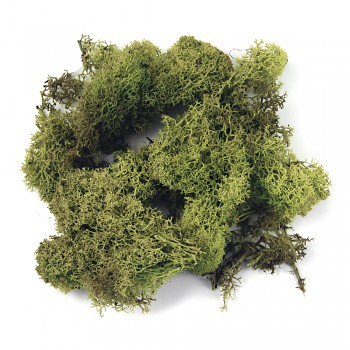 Icelandic moss light green / 30g