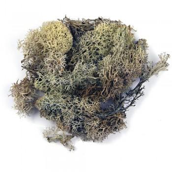 Icelandic moss natural / 30g