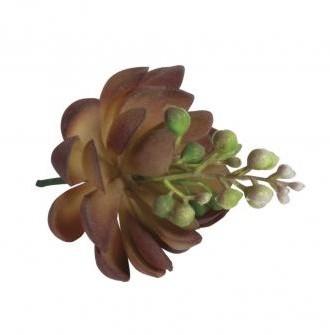 Soczysty, kamienny, różany, kwitnący, 7x9cm