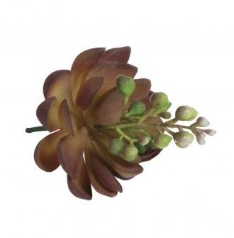 Succulent stone rose blooming, 7x9cm