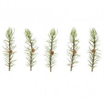 Larch twig with pinecones, 12cm, 5pcs