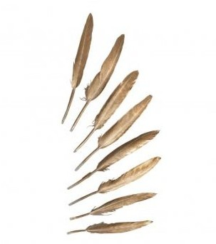 Decorative feather, 11-15cm, 8pcs, gold