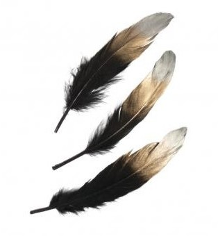 Decorative feather, 15-20cm / 3pcs