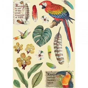 Drevené výrezy A5 / Amazonia Parrot